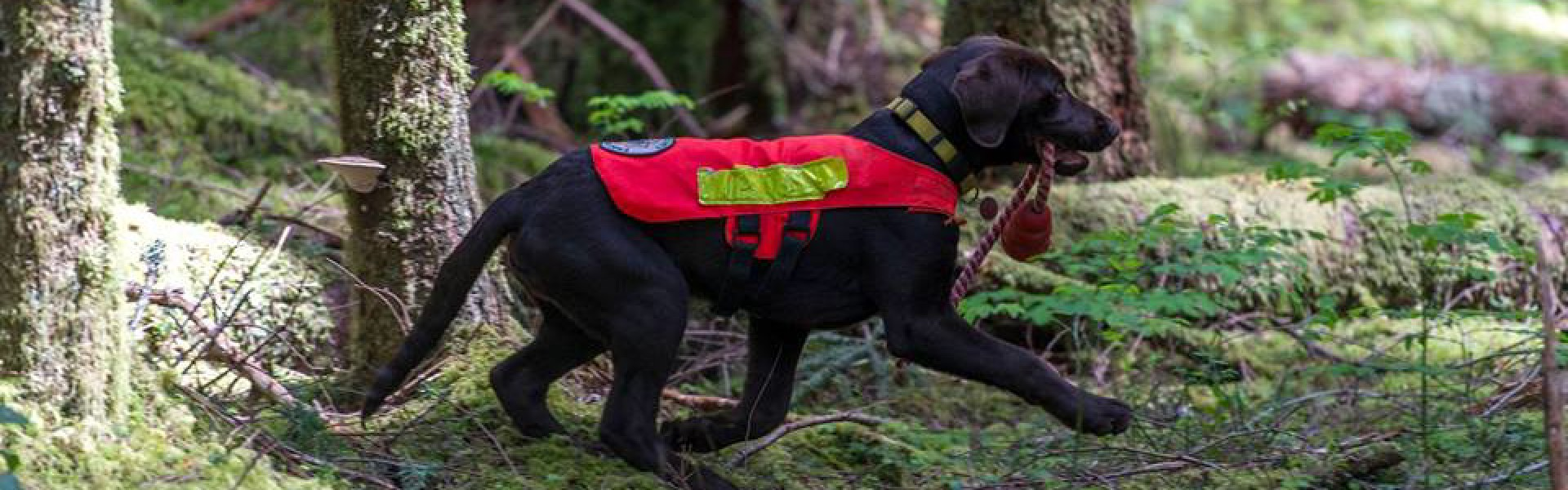 King County Search Dogs