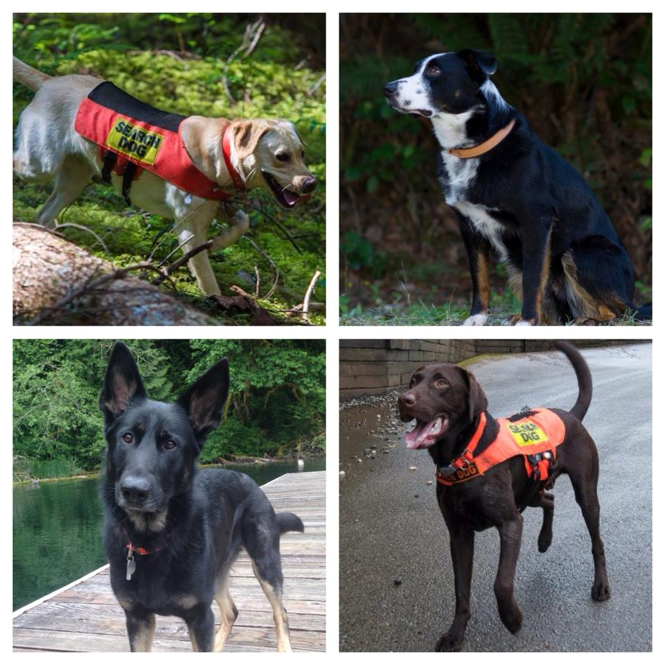 Certified Dog Training Classes Nyc