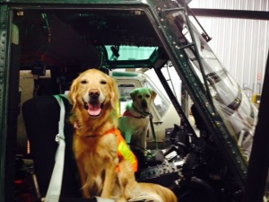 HeloDogs