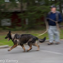 K9 Carlo on the move